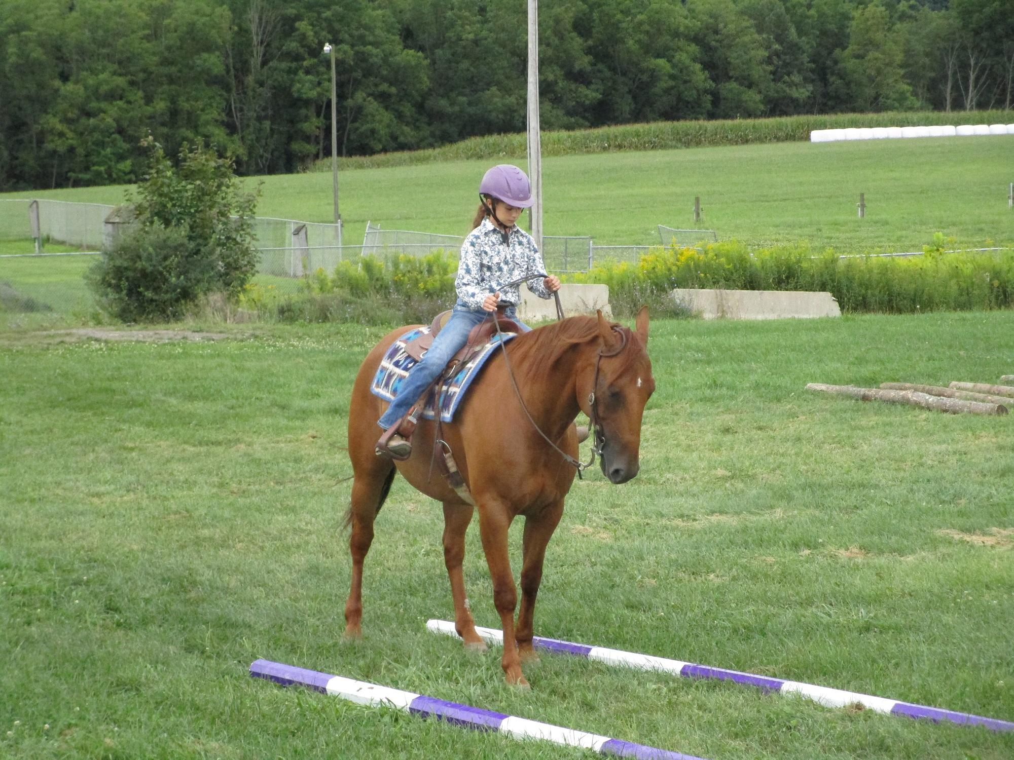children's horse show