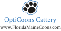 Florida Maine Coon by OptiCoons