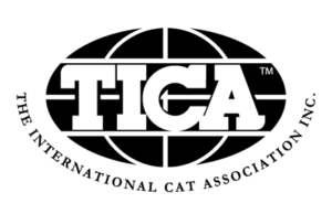 OptiCoons Cattery is a TICA registered premier breeder of Maine Coon Kittens in Florida