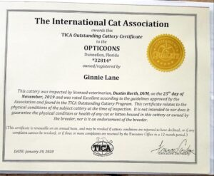 Florida Maine Coons by OptiCoons is a 2020 TICA Cattery of Excellence