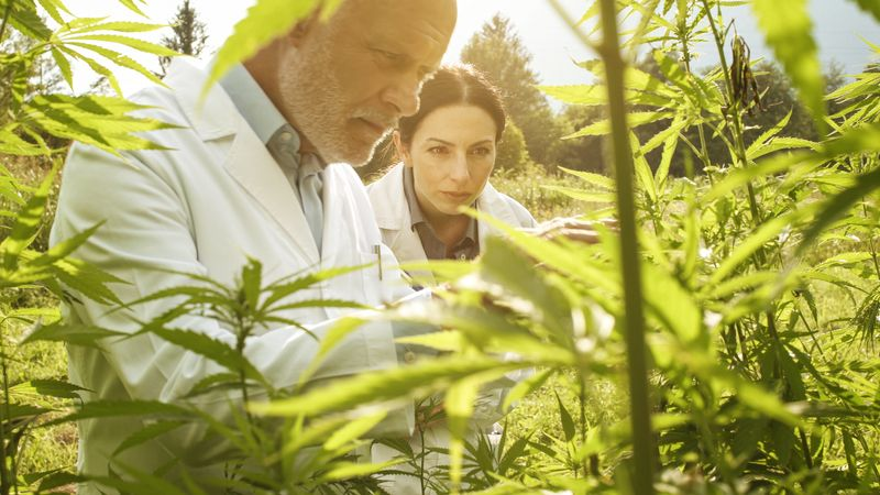 The Cannabis Industry: 6 important Trends