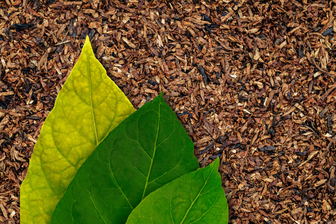 big-tobacco-struggling