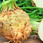 Celery Root or Celeriac