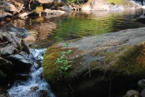 creekwrocks