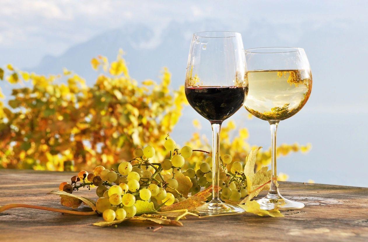 Vineyard with Wine Glasses