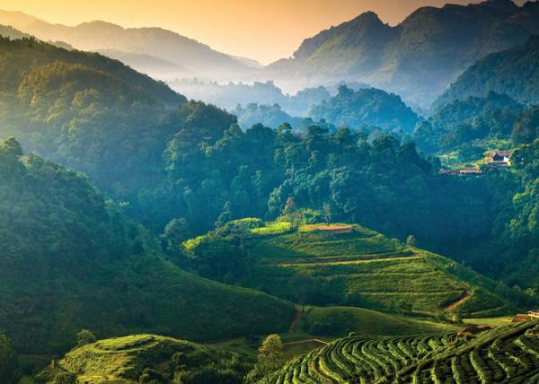 Thailand Terraced Hillsides