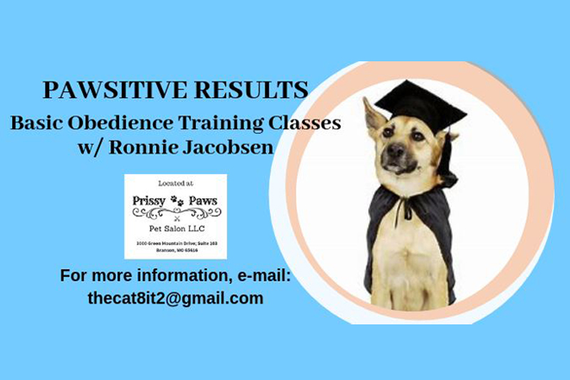 Pawsitive Results: Basic Obedience Training Classes – Week 1