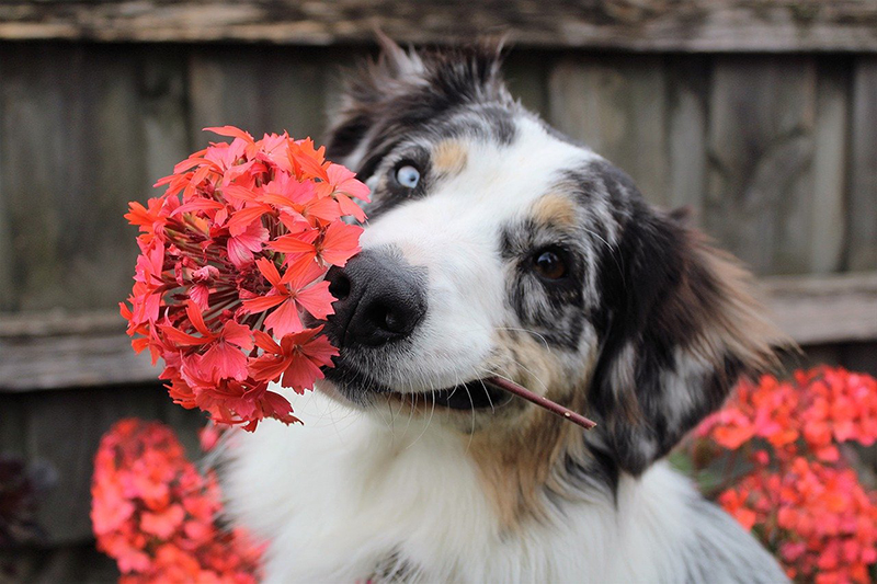 """Spring Pet Prep"""