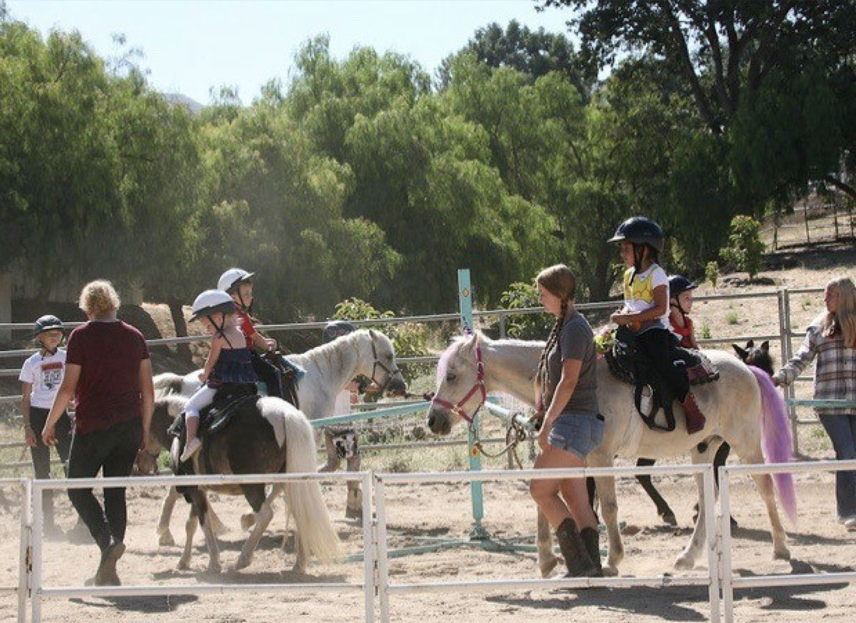 Pony Rides