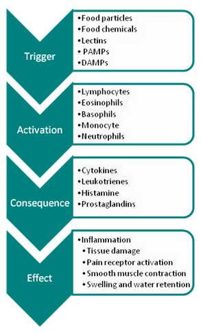 inflammatory cascade