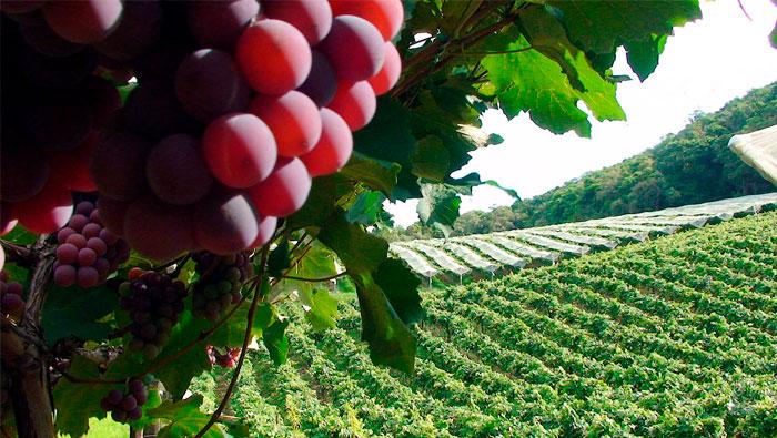 Famosa por suas uvas | As 100 Palavras Mais Usadas em Inglês | Palavra #74
