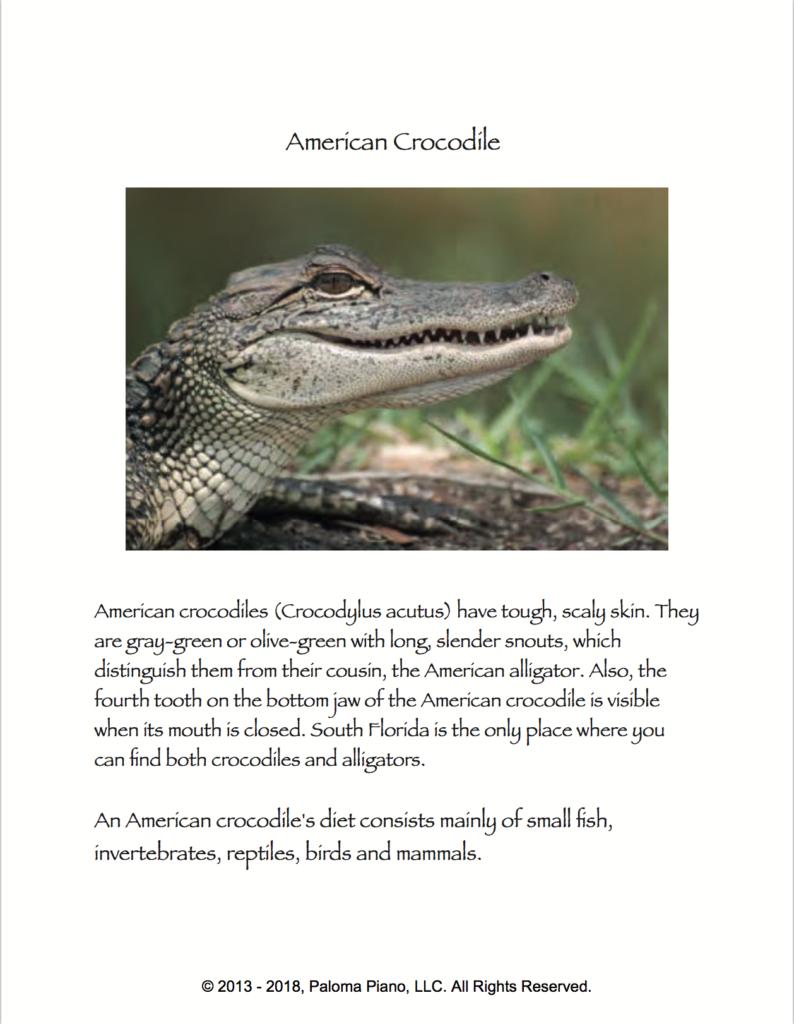 Paloma Piano - The American Crocodile - Page 1