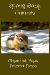 Spring Baby Animals - Chipmunk Cover