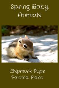Spring Baby Animals - Chipmunk Cover