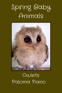 Paloma Piano - Spring Baby Animals - Owlets