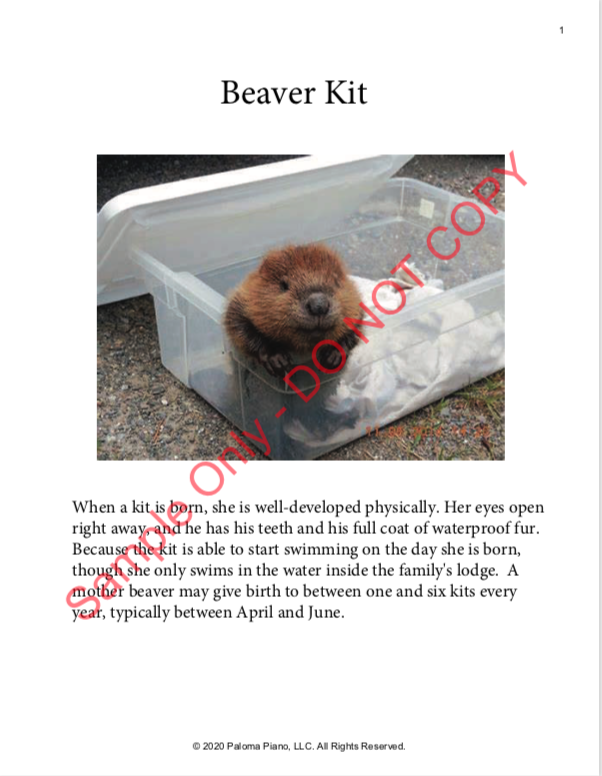 Paloma Piano - Spring Baby Animals - Beaver Kit - Page 1