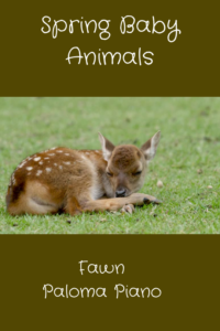 Spring Baby Animals - Fawn
