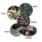 Dustmite-Bacteria-Pollen-Mold-Fungus