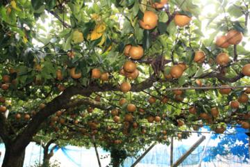 日本農業參訪(二)