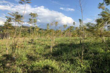 東勢植物多樣性園區 規劃已十年毫無動靜 山城民意代表應積極爭取