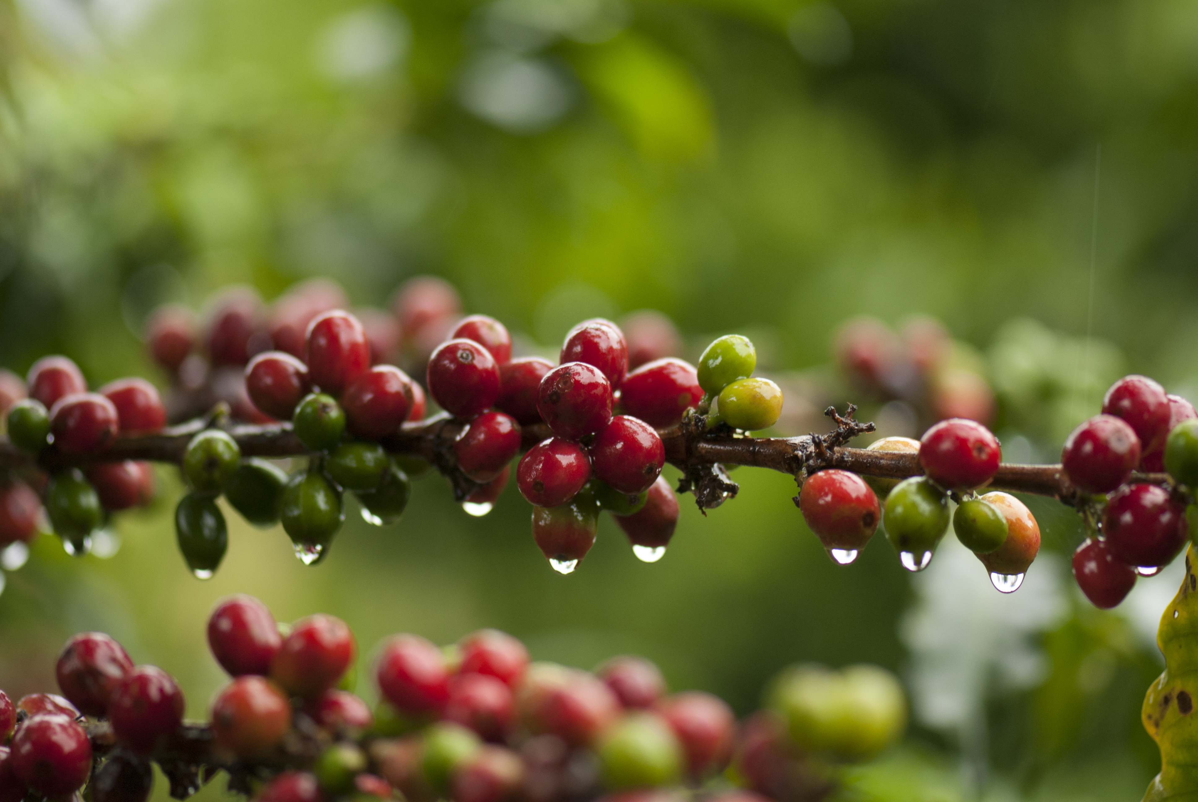 Single-Origin Coffee imported to New Jersey, Colombia ...