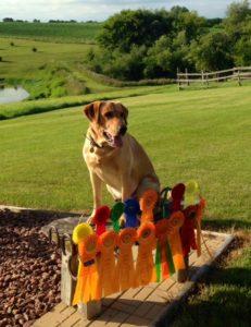 Testimonials | Iowa Pointing Labs