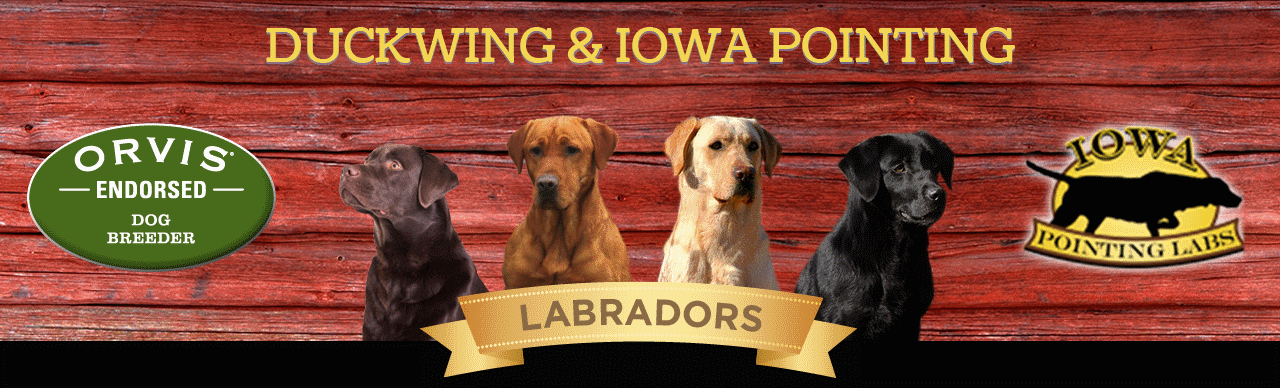 Iowa Pointing Labs
