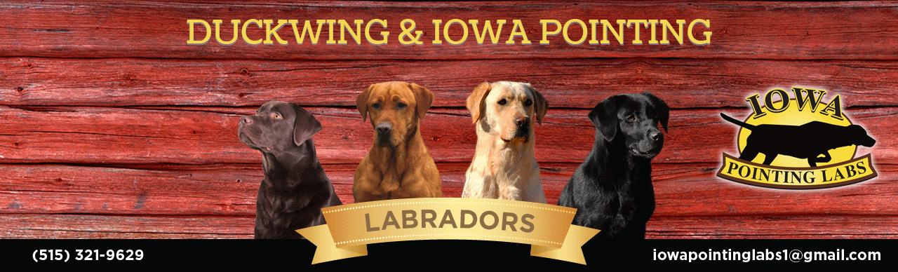 Iowa Pointing Labs