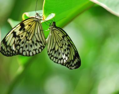 Butterflies from Butterfly Garden