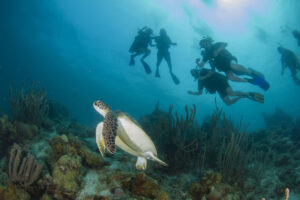 Turtle Divers Curacao