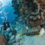coral curacao
