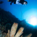divers curacao