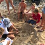 Sea Turtle Conservation Eggs