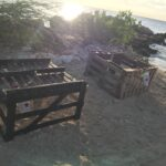 Protection Turtle Nest
