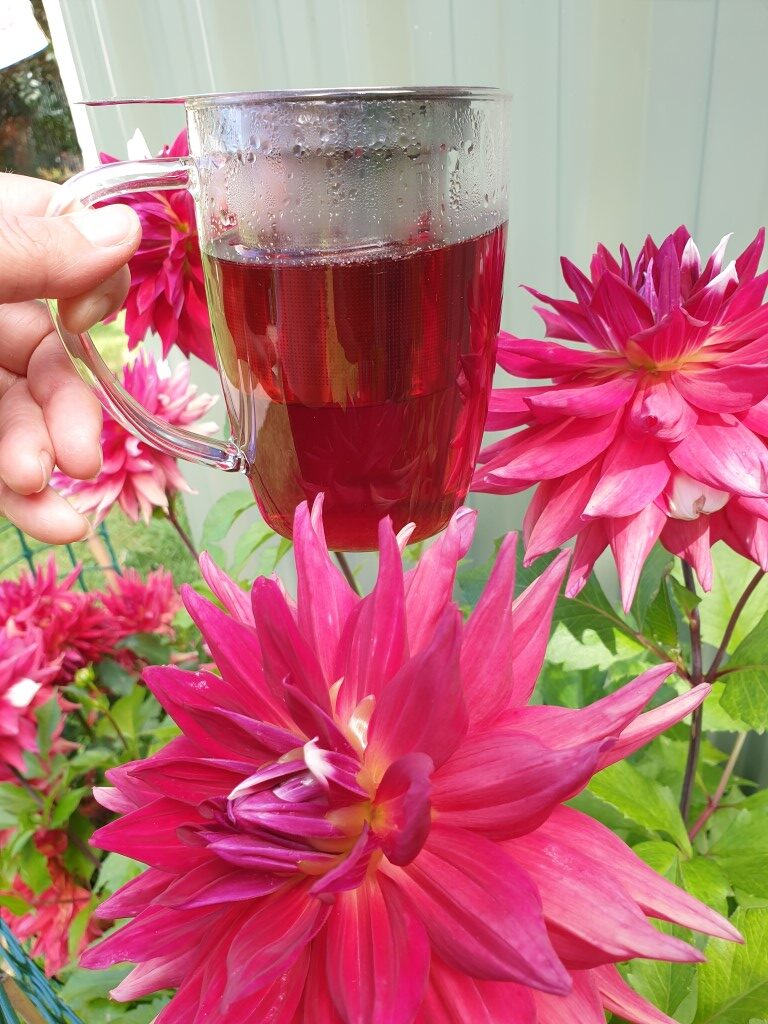 Hibiscus & Elderflower Spritzer by New Zealand Herbal Brew