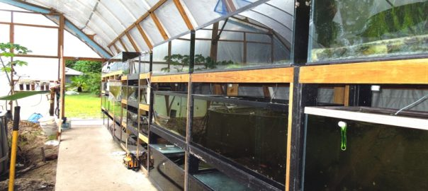 LIVEFINS Aquatics Greenhouse Growing Area