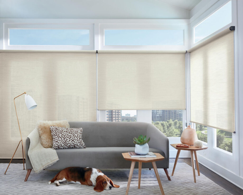 living room with roller shades and a beagle