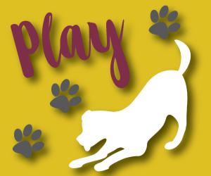 Pet-Friendly-Play
