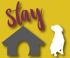 Pet-Friendly-Stay