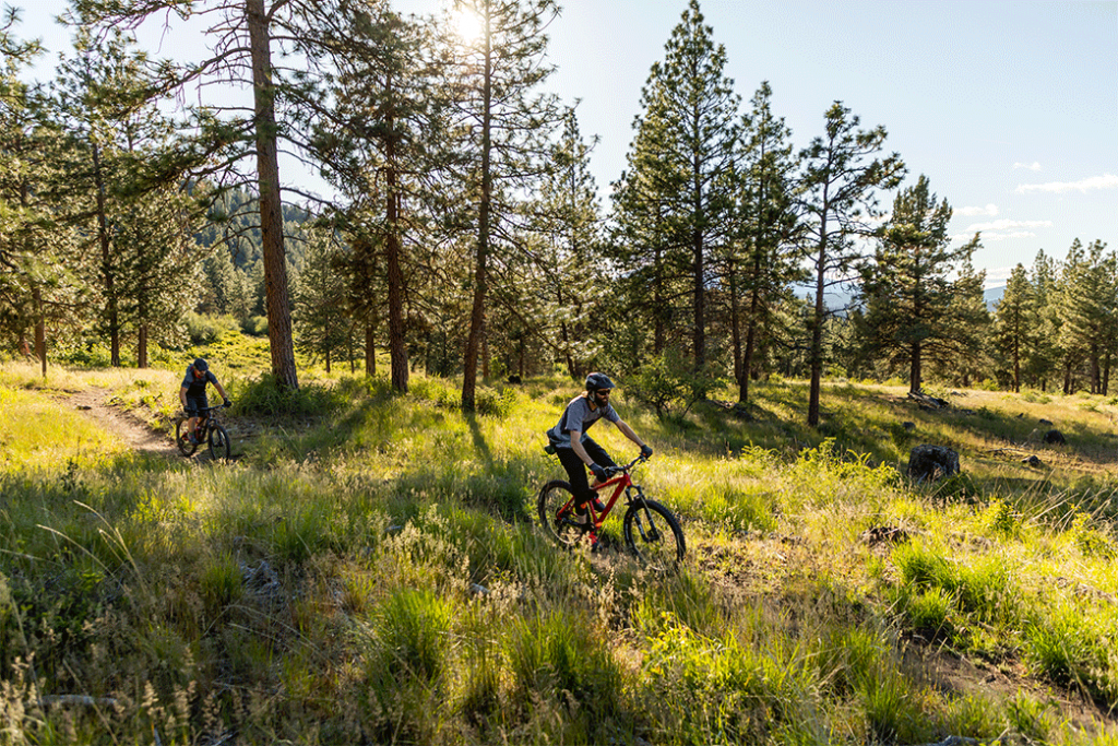 Mountain bike trail on Moore Mountain Trail Systems located in Klamath Falls, Oregon. Two men riding mountain bikes on a lush, bright green mountainside in a pine forest.