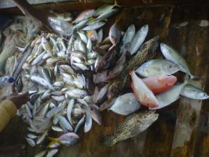 Hasil mancing dari Tanjung Pasir di Tandes sebelum Pulau Pari