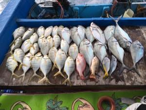 Ikan kwe gerong & bengali