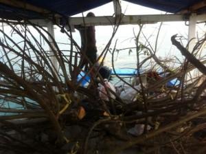 Fishing-Manning.com mengangkut batang pohon untuk rumpon ke lokasi strategis. Call 0818828526
