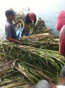 Fishing-Mancing.com menyiapkan daun kelapa ? myiur untuk rumpon. Call 0818828526