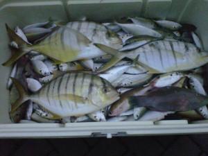 Ikan Kue Bengali strike di Karang Panjang bersama KM Bintang Fajar