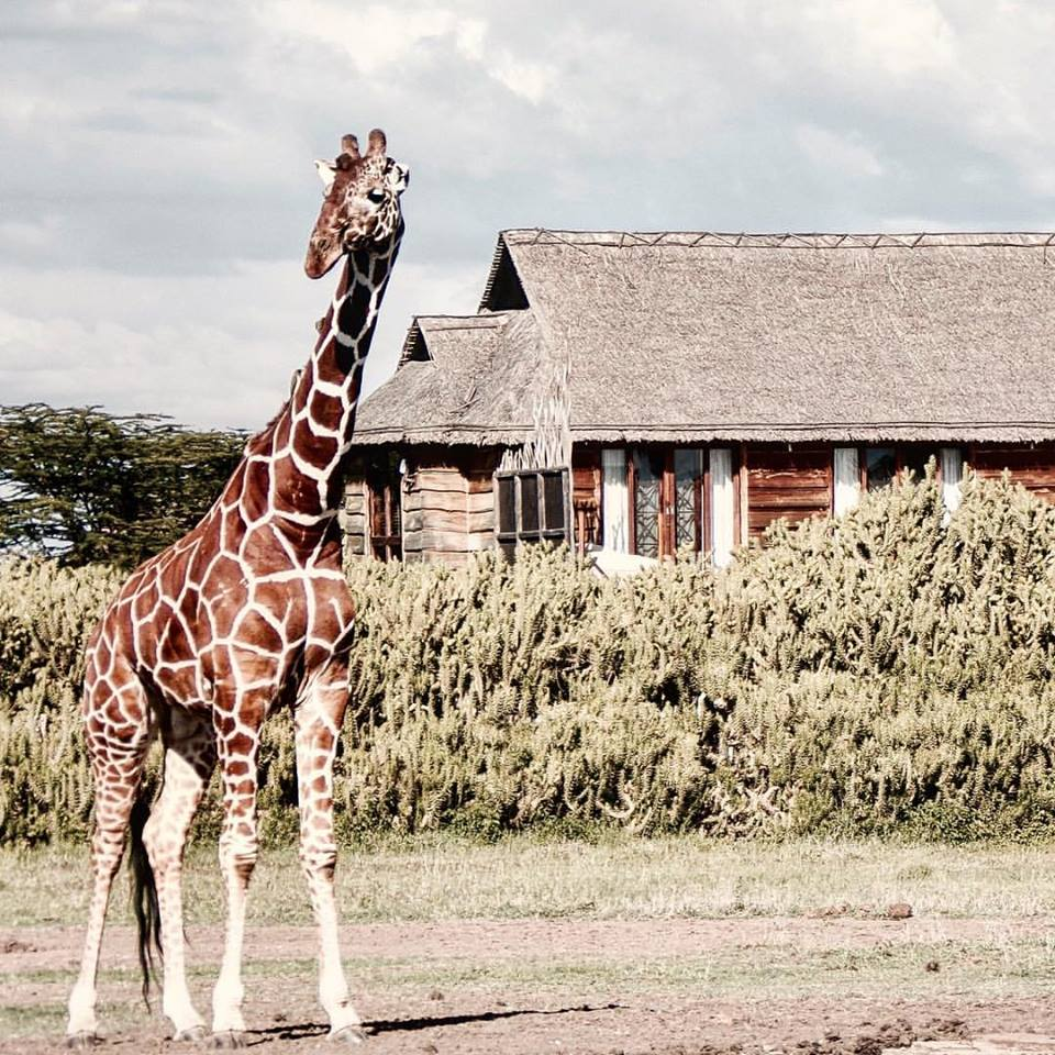 Segera Retreat in Kenya