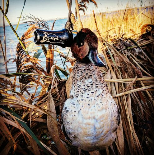 Lead Head Waterfowl
