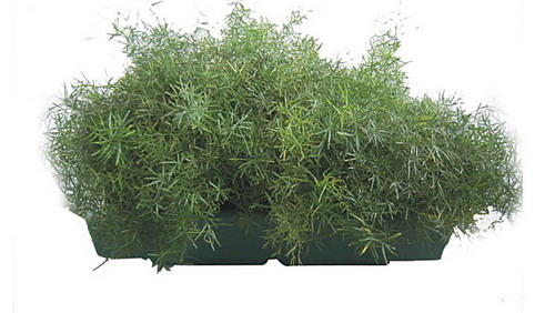 plant_container_project_pic_10