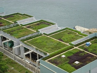 Why Build Green Roofs?