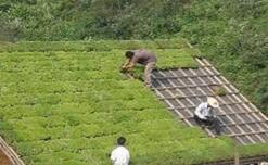 Plastic Trays — The Ideal Solution for Roof Greening
